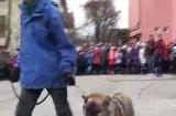 Spectacol de dresaj canin pentru copii