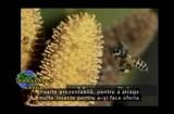 Sanatatea Ta Natura 06.06.2012 p2