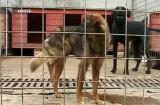 Un nou adăpost pentru câini